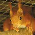 squirrel-4-web
