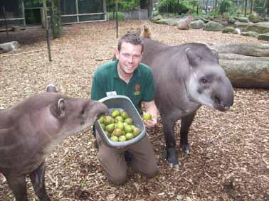 tapir-pears-007-web