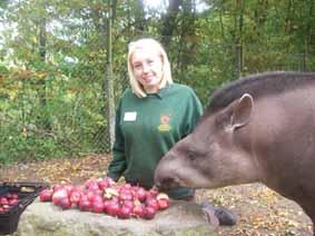 tapirs-applesweb