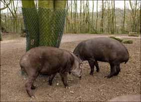 tapirtreefence3-web