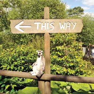 this way web