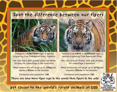 tiger-posts-2-web