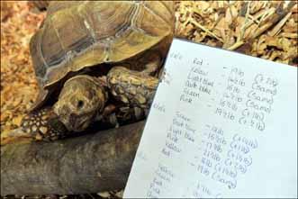 tortoisepainting4web