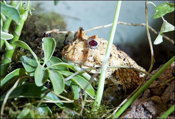 web_albi_frog
