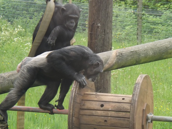 web_chimp_wheel3_2