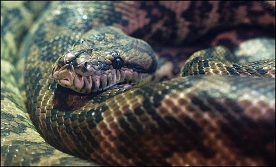 web_dzg_carpet_python_3_0