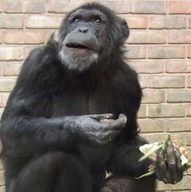 web_chimp_cake