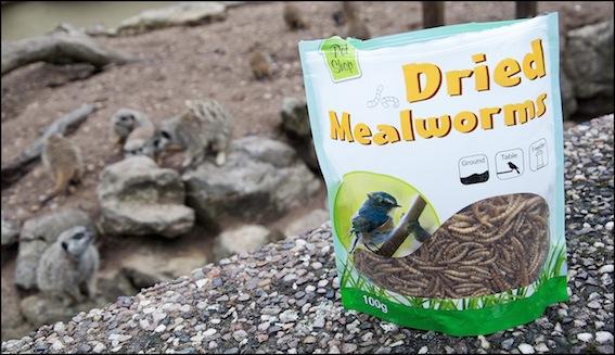 web_dzg_meerkat_mealworms_6_2