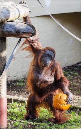 web_dzg_orang_halloween_1_copy