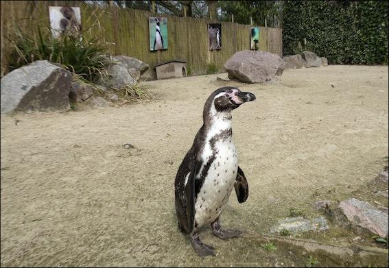 web_dzg_penguin_beach_4