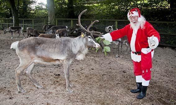web_dzg_santa_reindeer