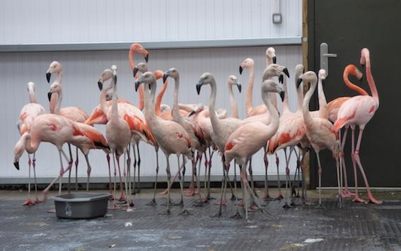 web_flamingo_2