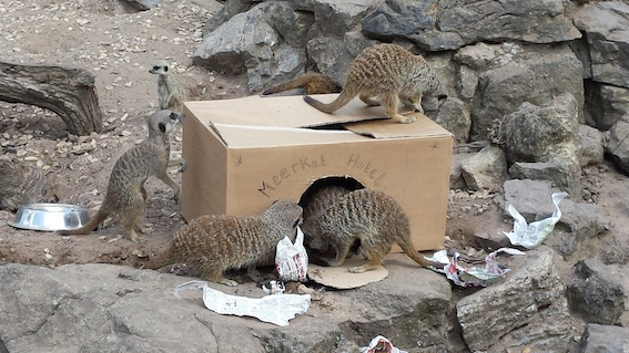 web_meerkat_enrichment
