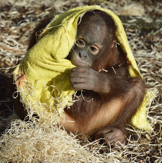 web_orang_blanket1