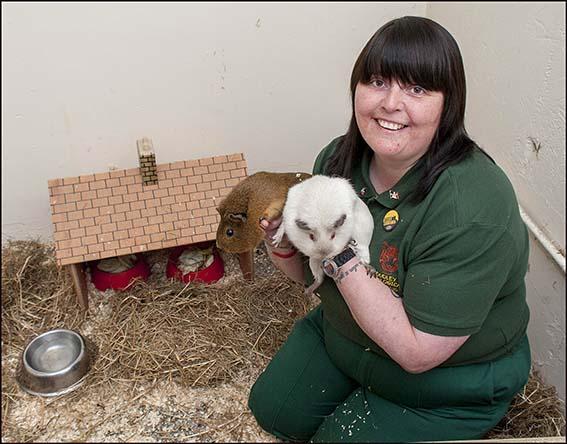 webdzg_dc_new_guinea_pigs_1