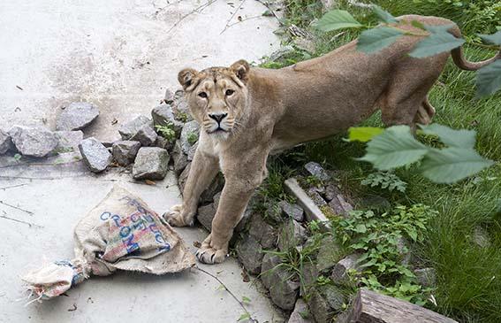 webdzg_lions_enrich6