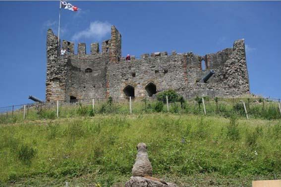 webmeerkat_castle