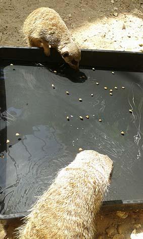 webwatermeerkat